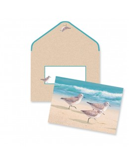 Boxed Note Cards - Sandpipers